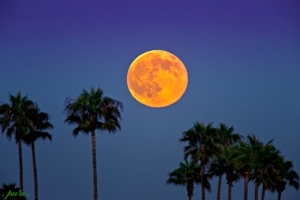 Harvest Moon & Children's Festival Sunday at Buddhist Temple in Ventura