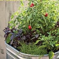 container-garden-0410-m