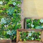 succulent-art-0210-m